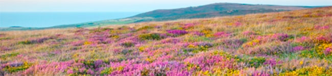 Cornwall's amazing range of natural habitats, from beaches and dunes to moorland heath, makes it home to a wide variety of birds, flowers and animals, including many rare or endangered species.