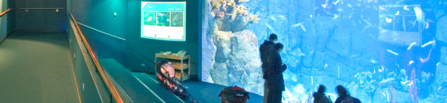 The National Marine Aquarium in Plymouth has many huge aquariums, an interactive dive show and a 4D film theatre which are definitely worth visiting.