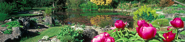 Cornwall's mild, damp climate has made the county prime for growing all sorts of exotic ferns, palms and exotic shrubs. In fact one of the largest gardens is the only place in England where tea bushes are grown!