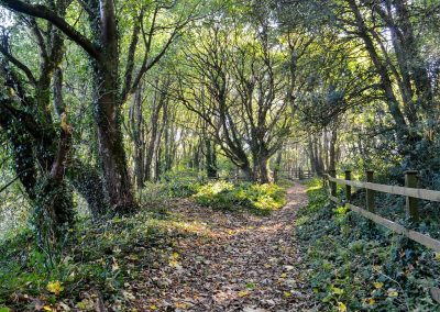 The 2½ acre woodland garden at Peakaboo, Sidmouth