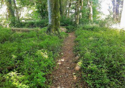 The woodland area at Glebe House Cottages, Bridgerule
