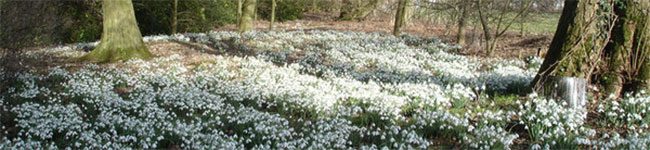 The snowdrop weekend at Hartland Abbey is one of those occasions that will take your breath away add a spring to your step and a smile to your face.